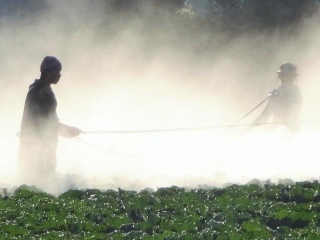 農薬散布のイメージ写真